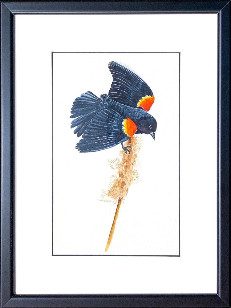 red wing framed Edit