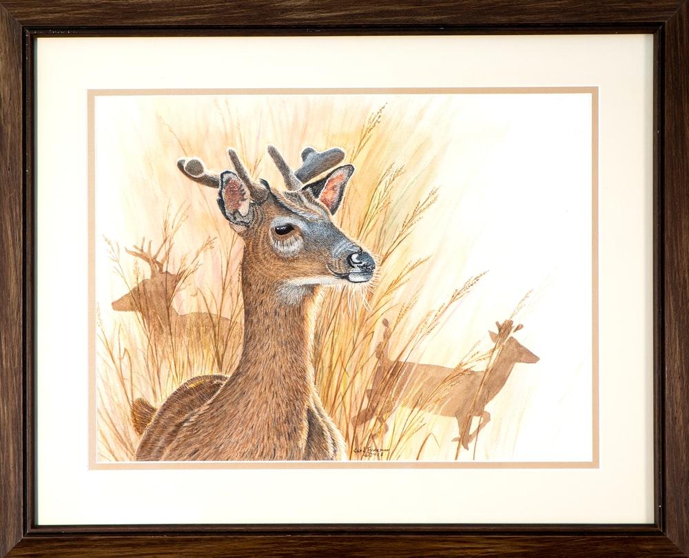 Velvet Buck Framed