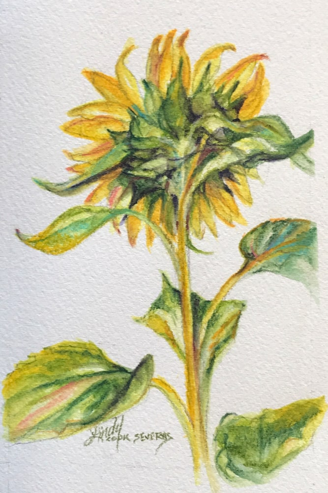 Shy Sunflower 6x4 watercolor Lindy C Severns