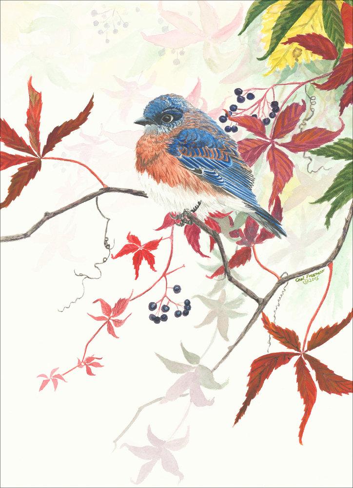Virginia s Bluebird