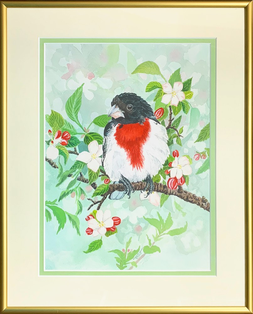Rose breasted Grosbeak Framed