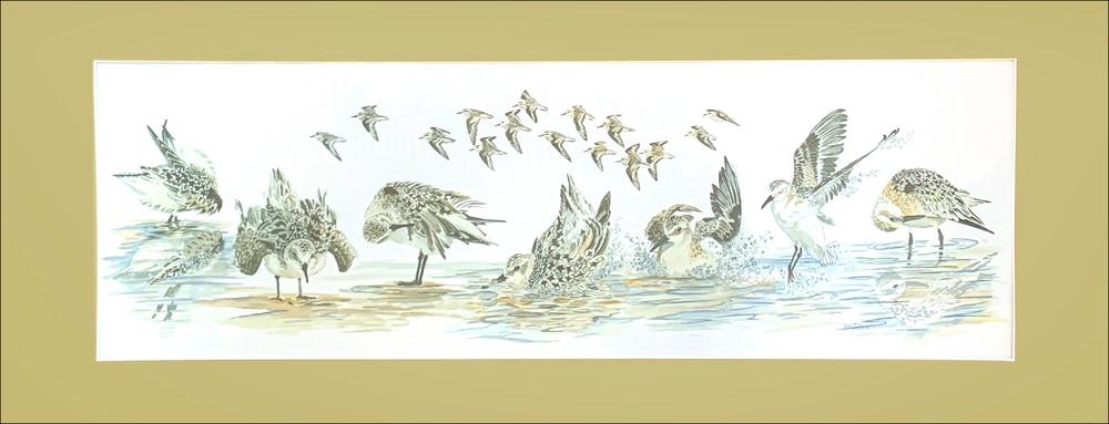 Sanderling Antics matted