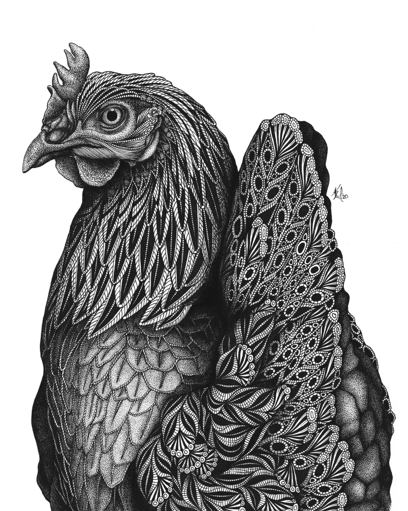 Priscilla (chicken)
