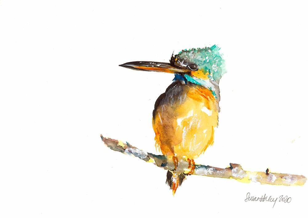 Susan Haley 005 Kingfisher 2000px