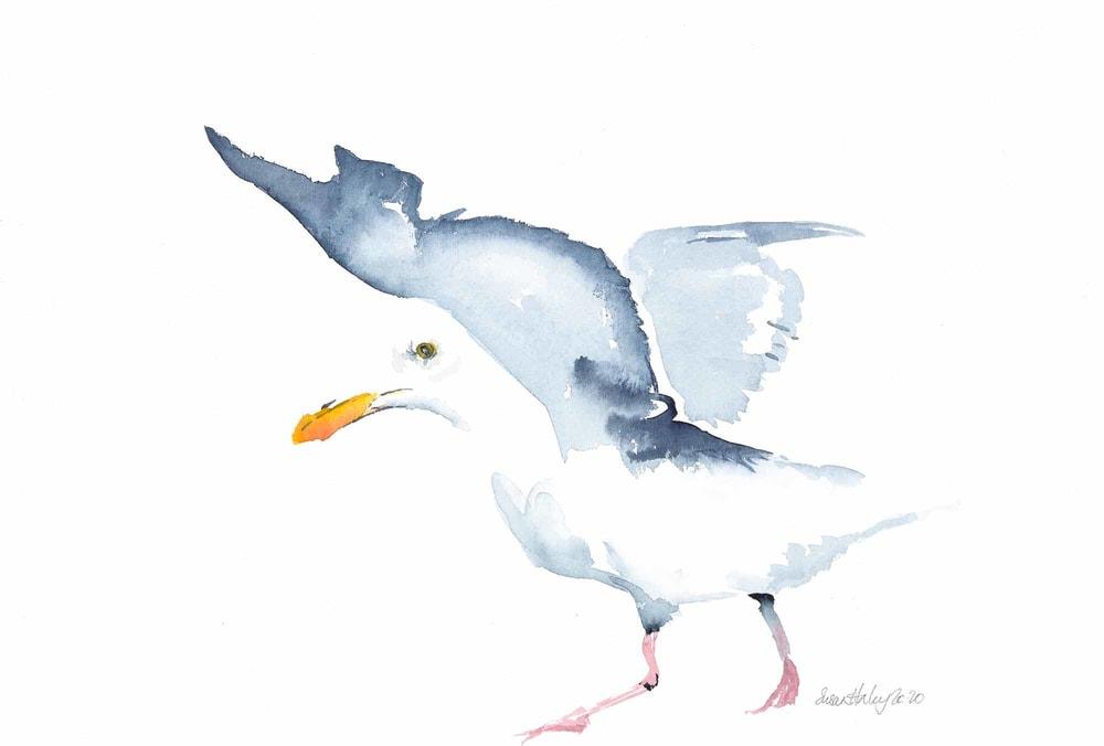 Susan Haley 009 Seagull 2000px