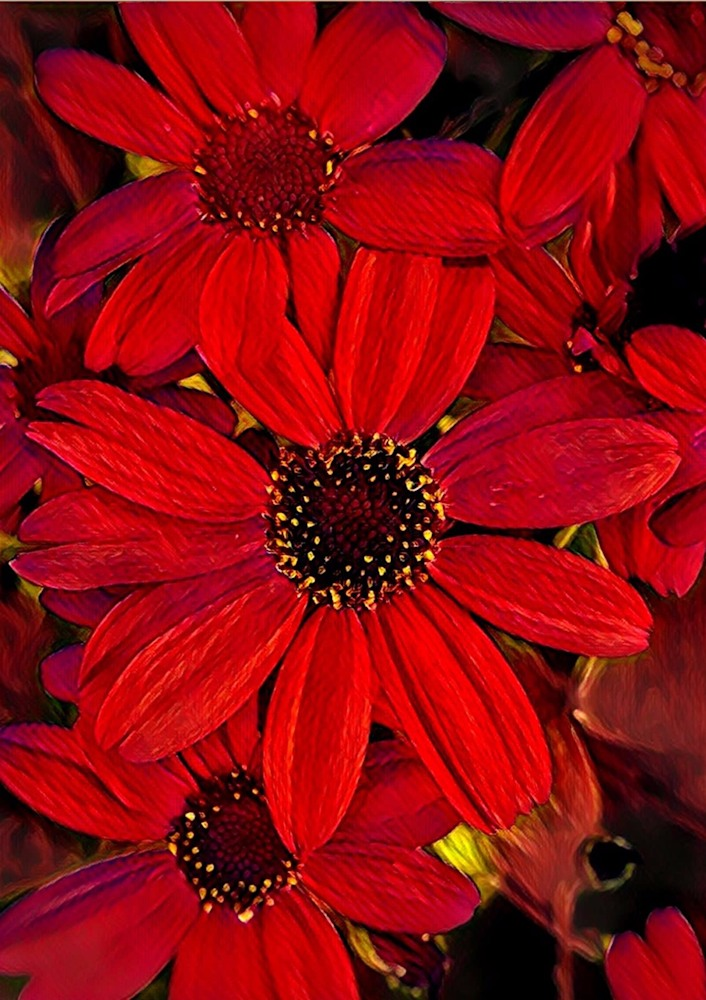 Cineraria  Vertical Blank 5x7 Card