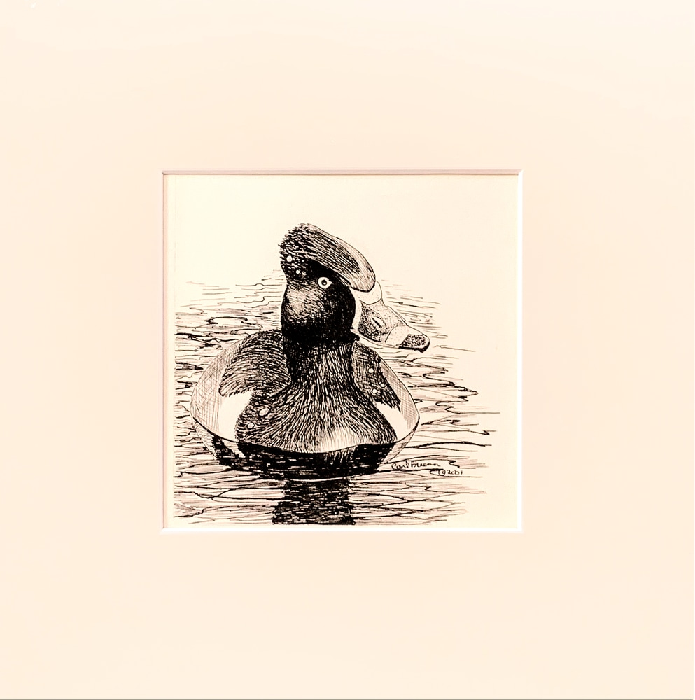 Ring necked Duck Matted