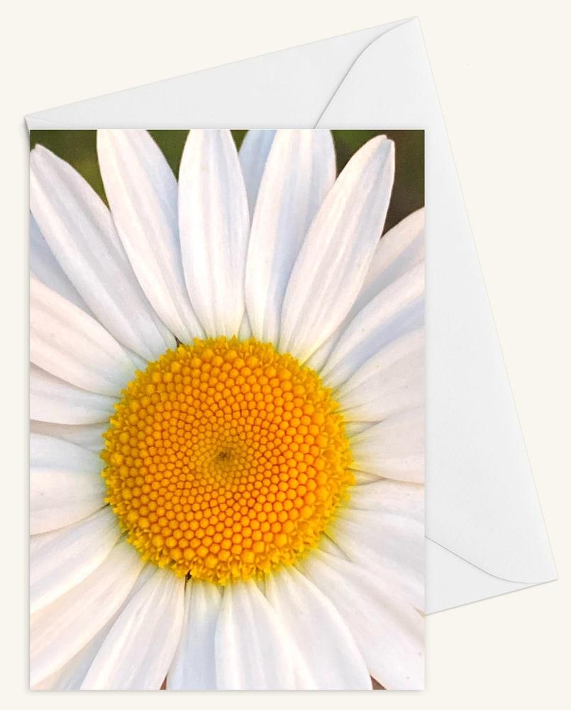Daisy w Envelope