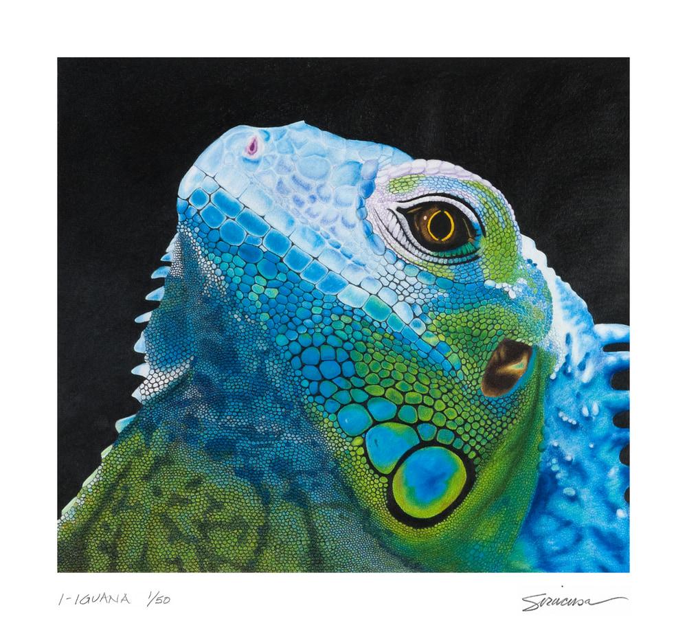 I Iguana 12 x 11