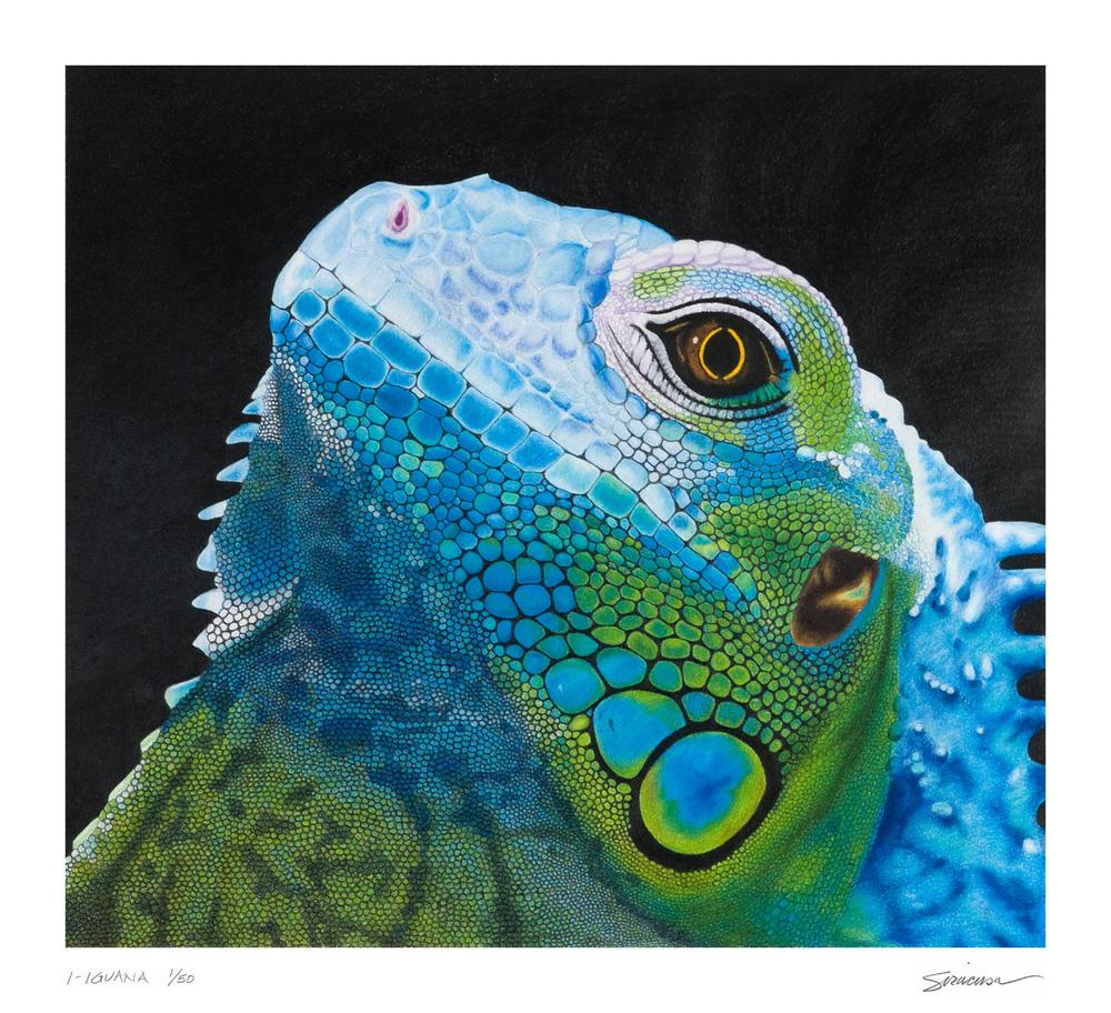 I Iguana 17 x 15 5