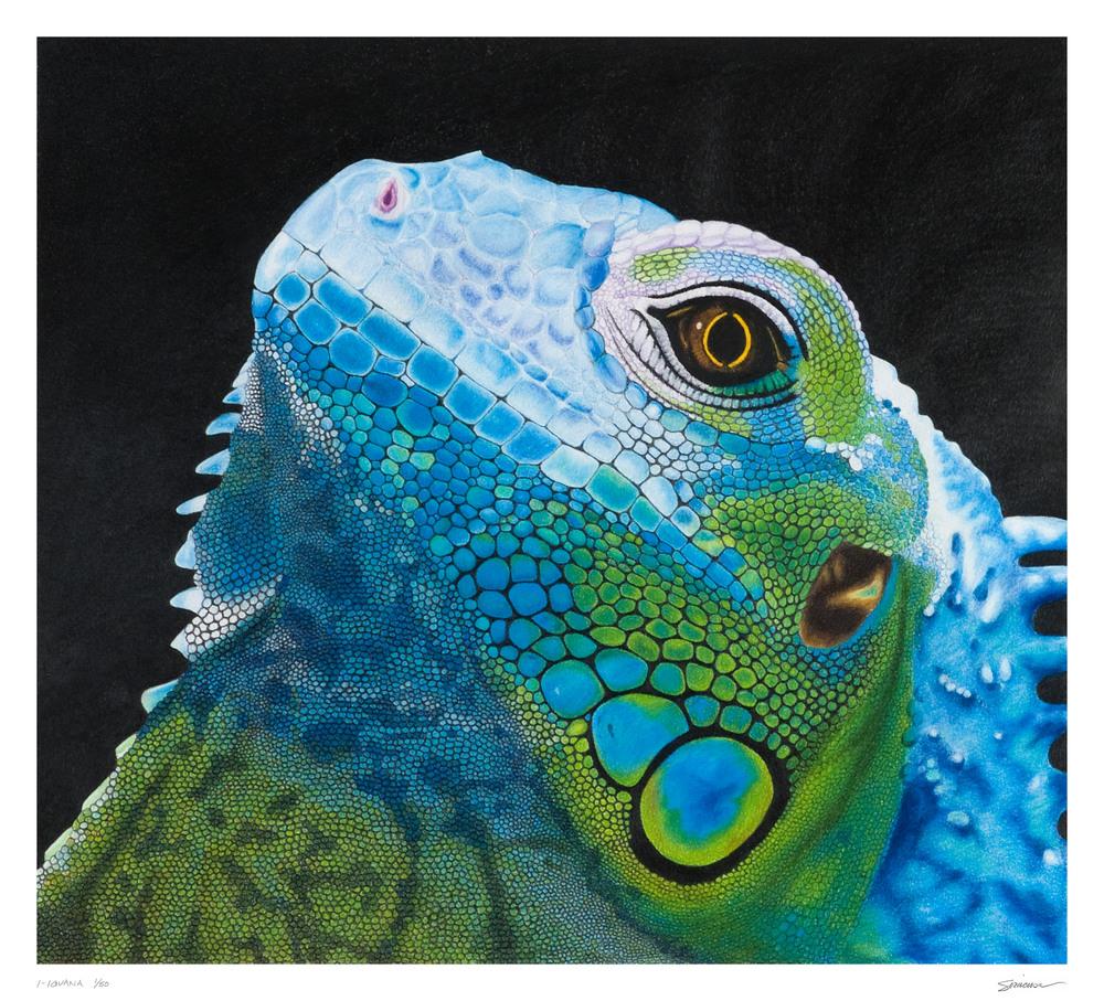 I Iguana 30 x 27 2