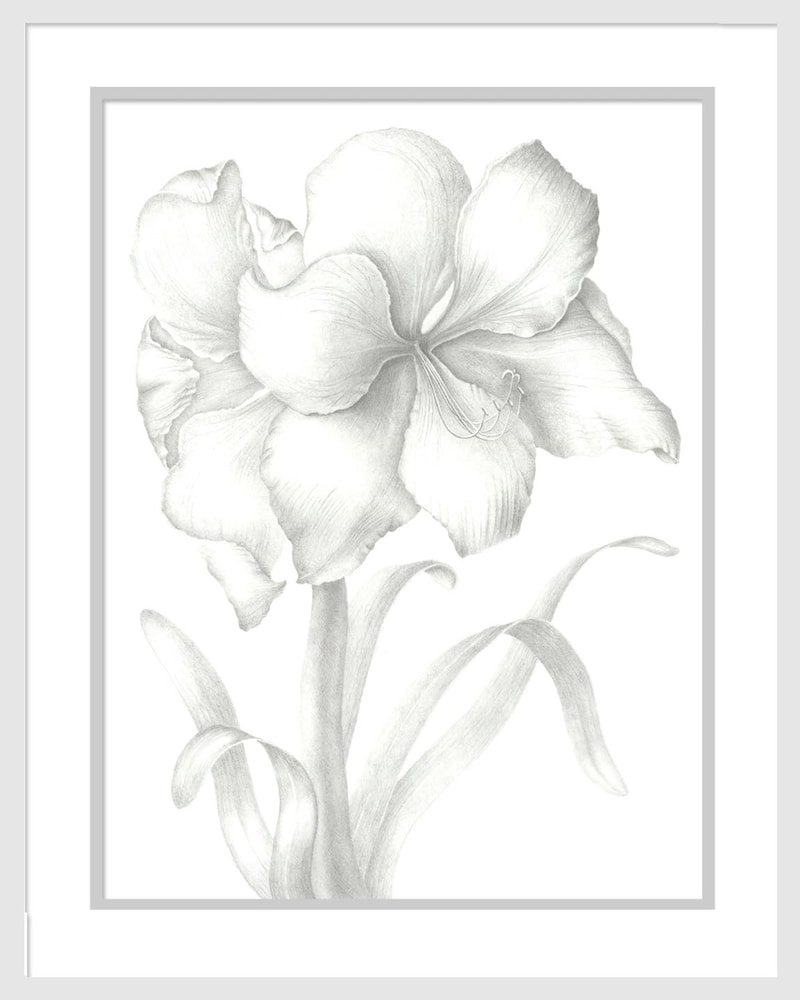 040401 hippeastrum 12x16 matted to 16x20