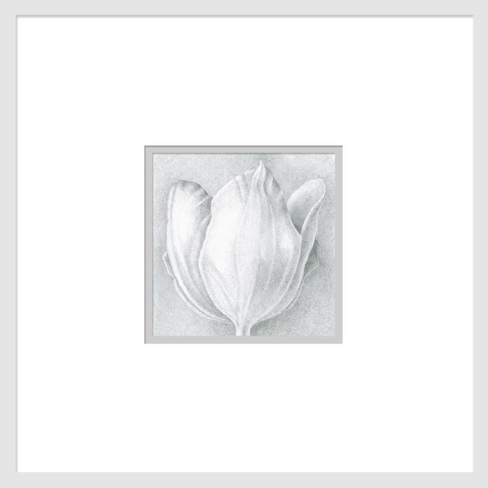 080701 orange tulip drawing series #1 6x6 matted to 16x16