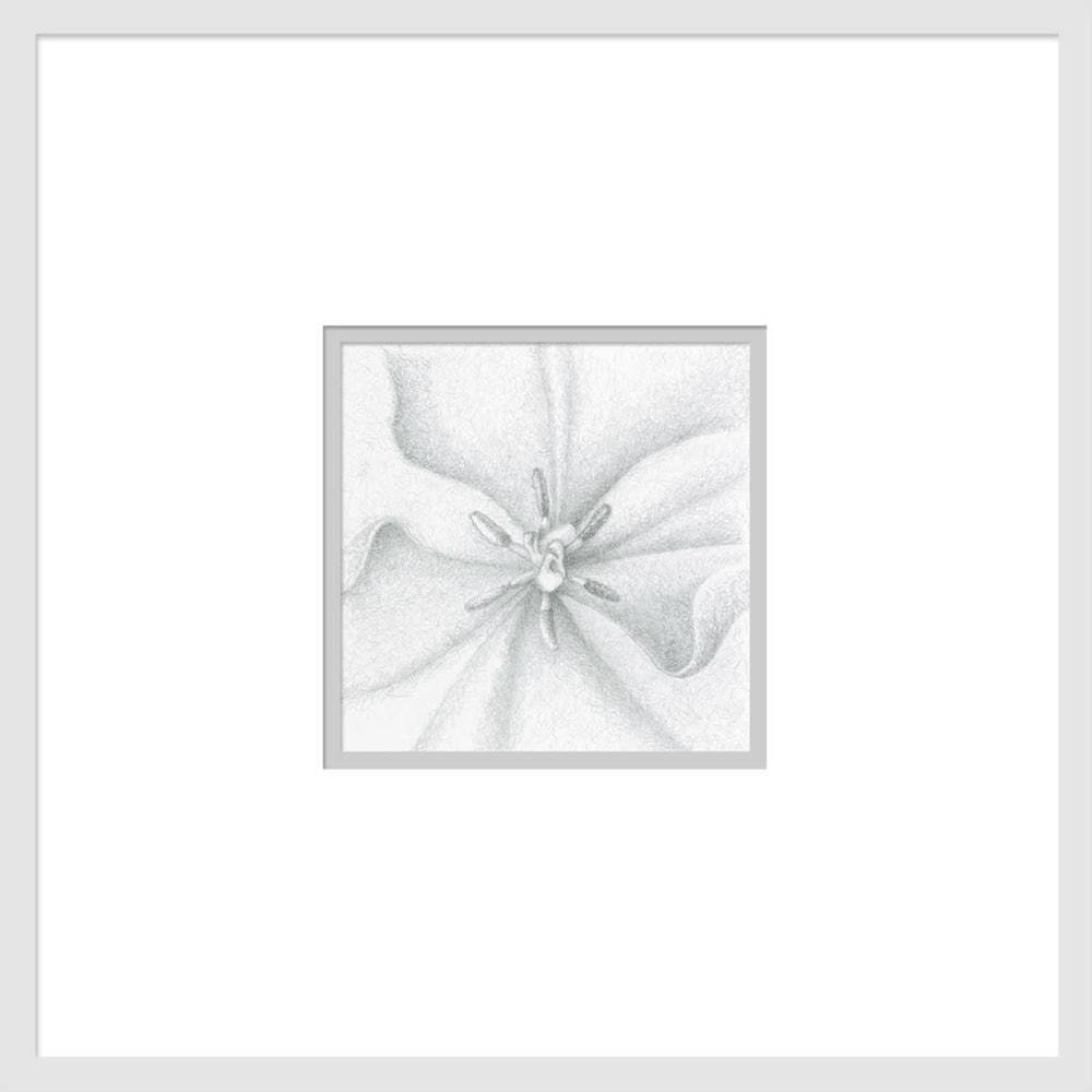 080701 orange tulip drawing series #2 6x6 matted to 16x16