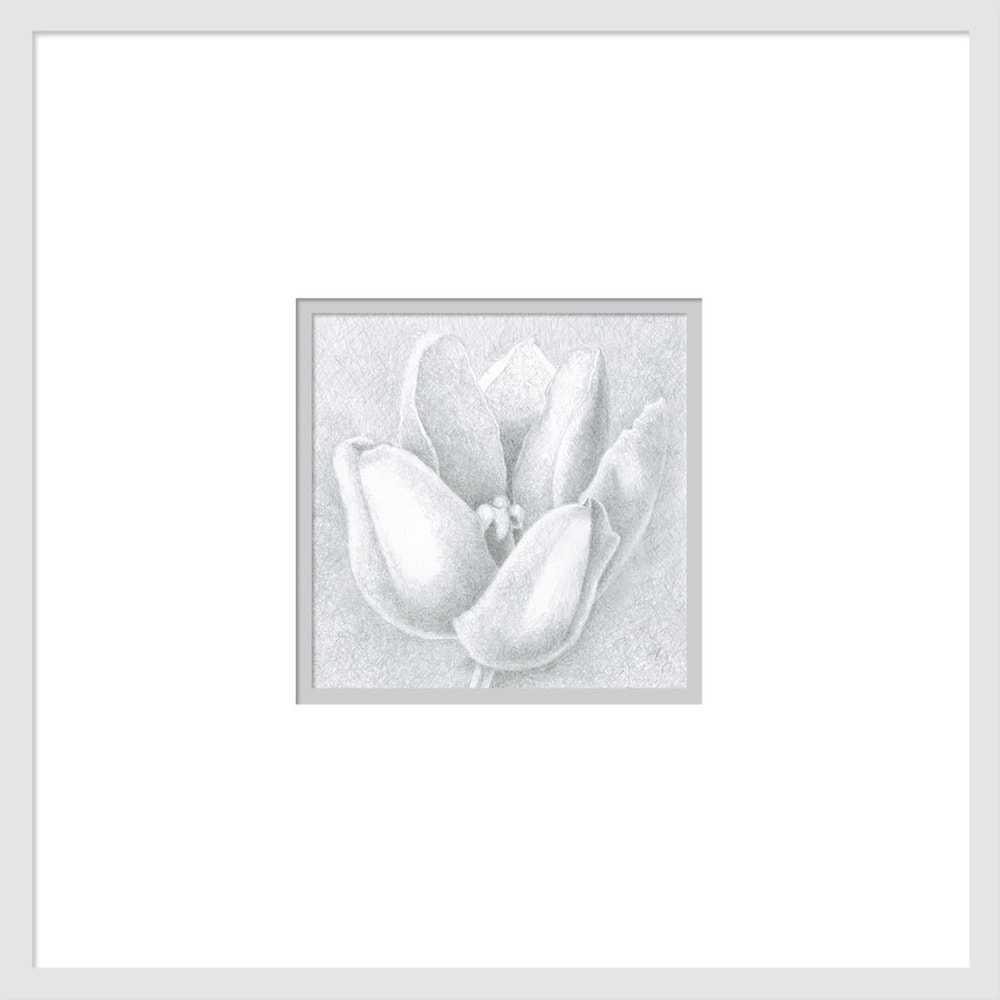 080701 orange tulip drawing series #3 6x6 matted to 16x16