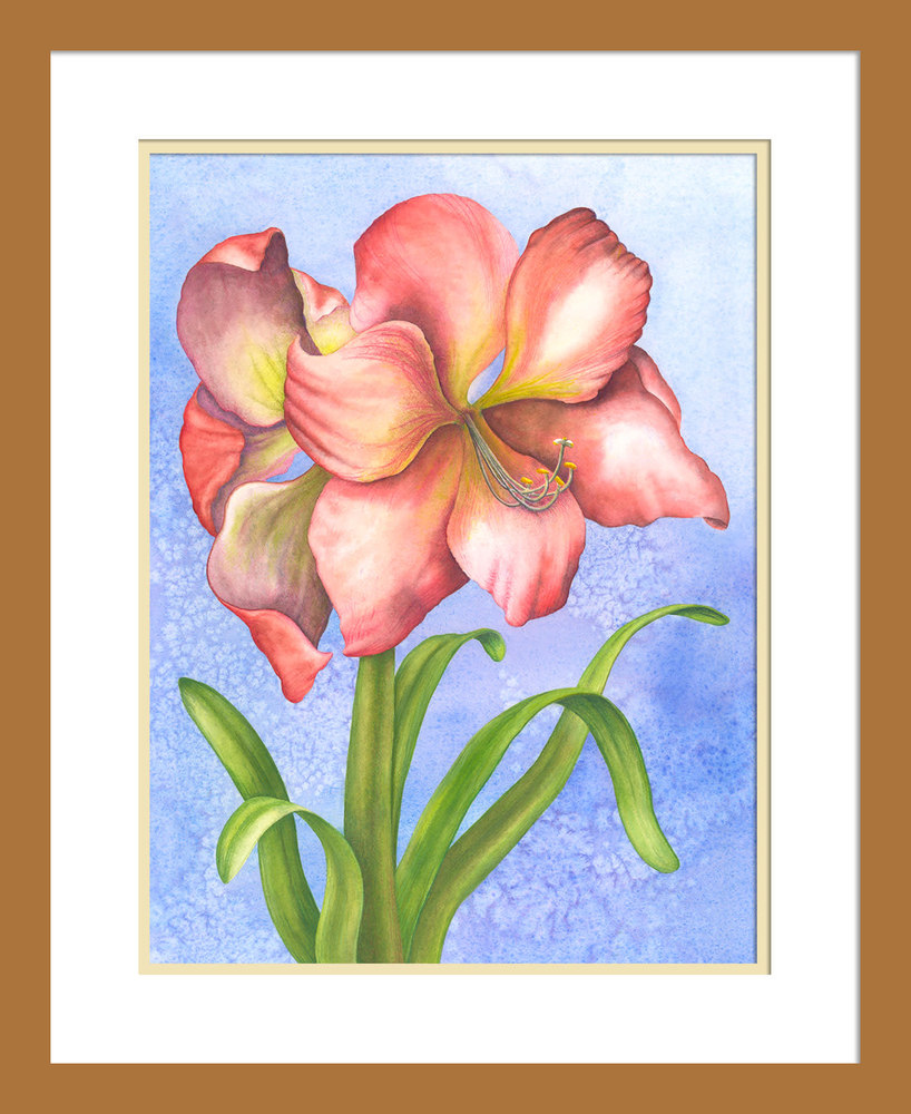 040402 Hippeastrum 12x16 matted in 16x20 frame