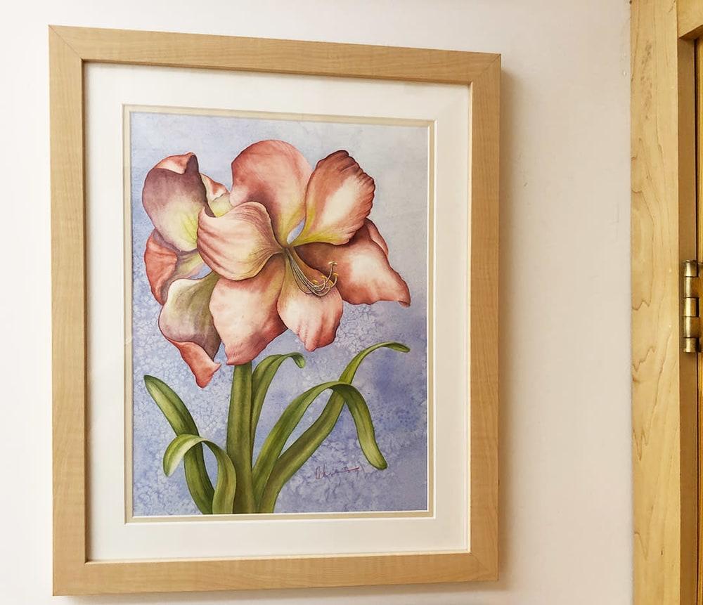 Hippeastrum framed studio IMG 0425