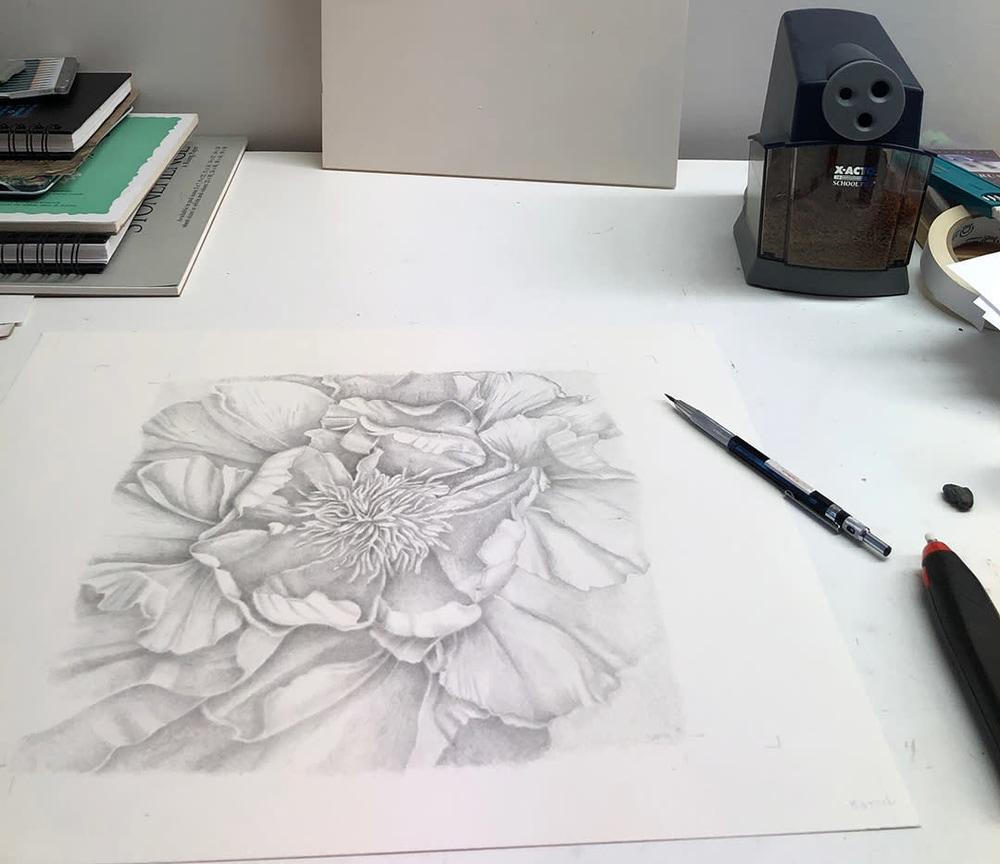 peony drawing WIP IMG 0138