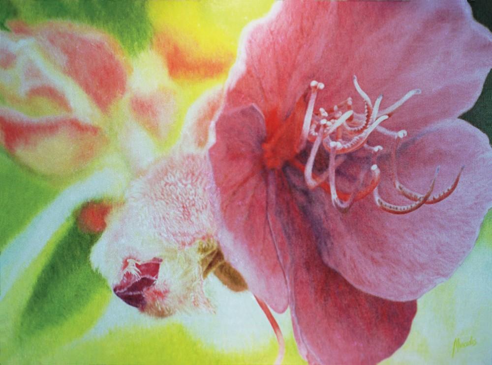 FlowerGloryBush RGB