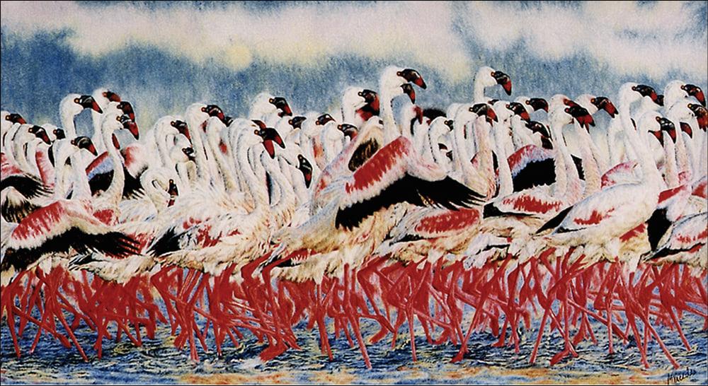 Flamingos RGB