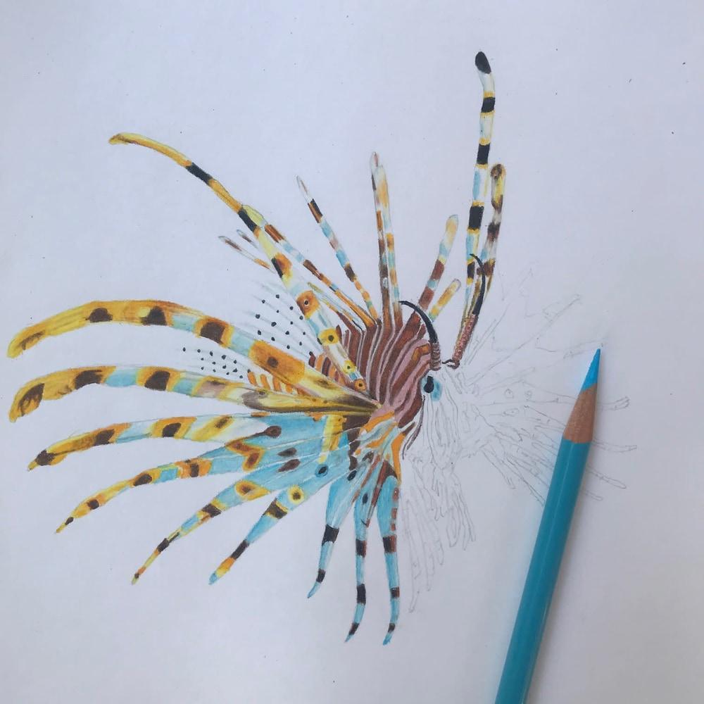 Lion Fish progression 2