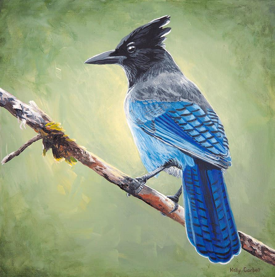 62bird