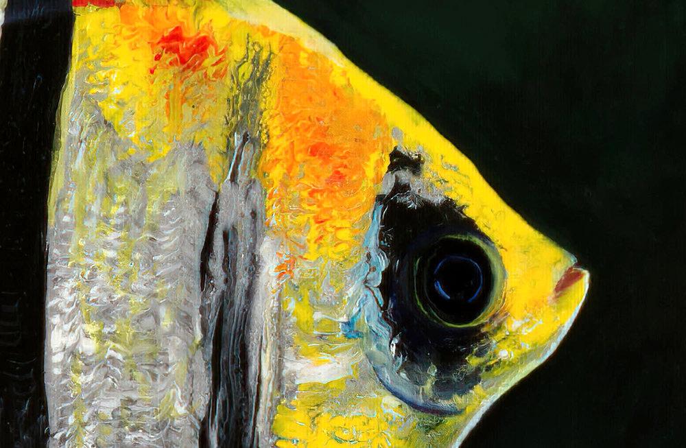 Angle Fish SunnySideUp DETAIL1