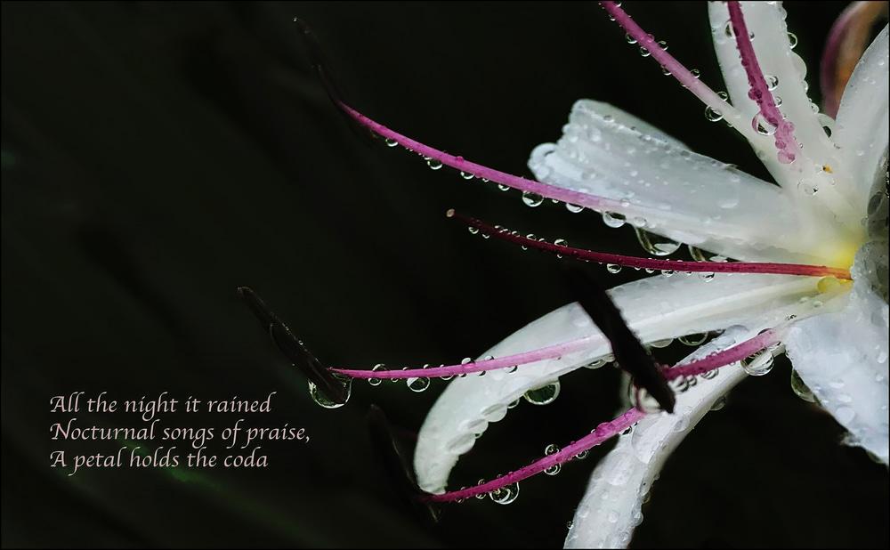 petal coda