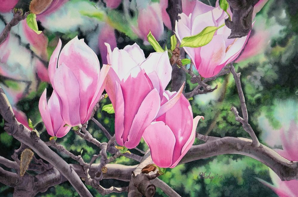 magnolia optimized