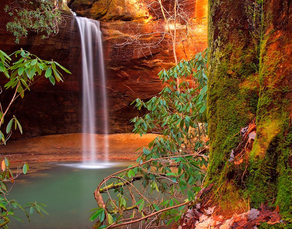 Copperas Creek Tree 11x14 Canon SemiGloss