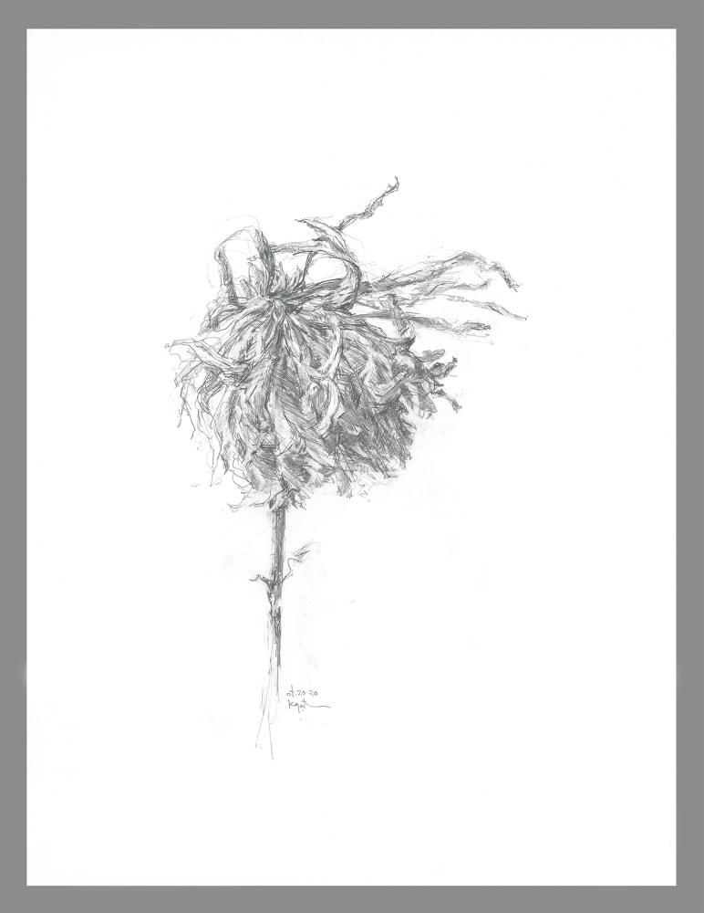 gatesman chrysanthemum 02 (L+R) (300