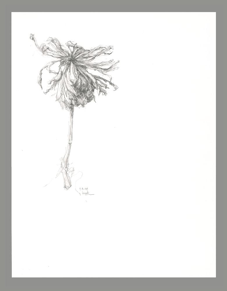 gatesman chrysanthemum 01 (L+R) (300