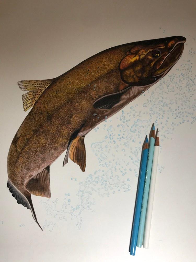 King Salmon Progress 12