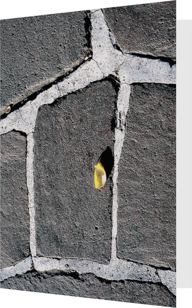 CLOSER MEXICO GUADALUPE RIND MEX113 abstract photography Sherry Mills PRINT 4 GREETING CARD 1