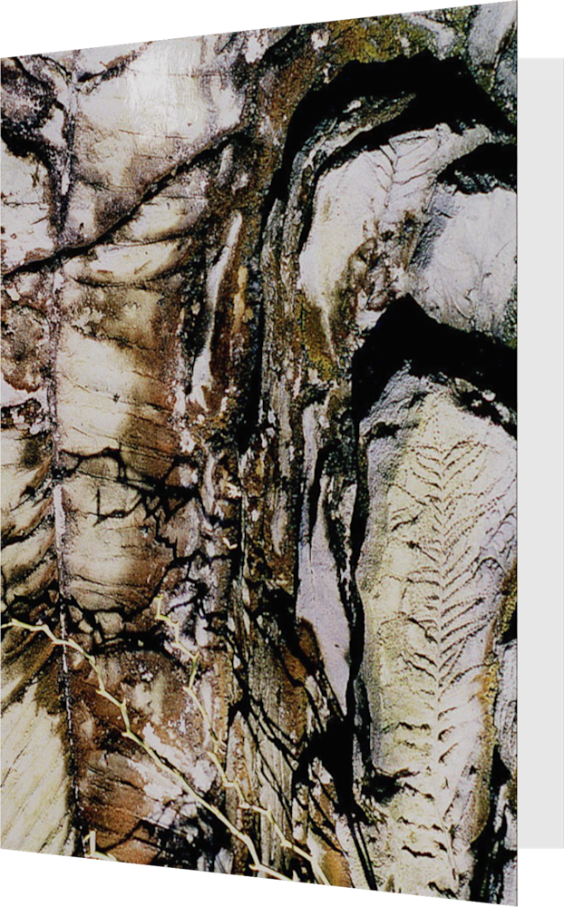 CLOSER EARTH FOSSIL ACNY1195 nature photography Sherry Mills PRINT 2 GREETING CARD 1
