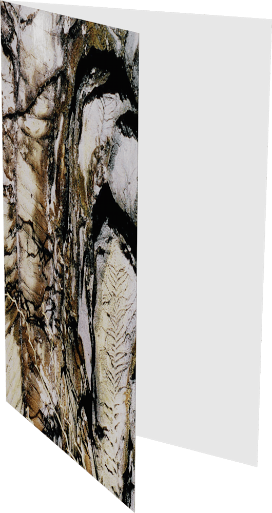 CLOSER EARTH FOSSIL ACNY1195 nature photography Sherry Mills PRINT 2 GREETING CARD 2