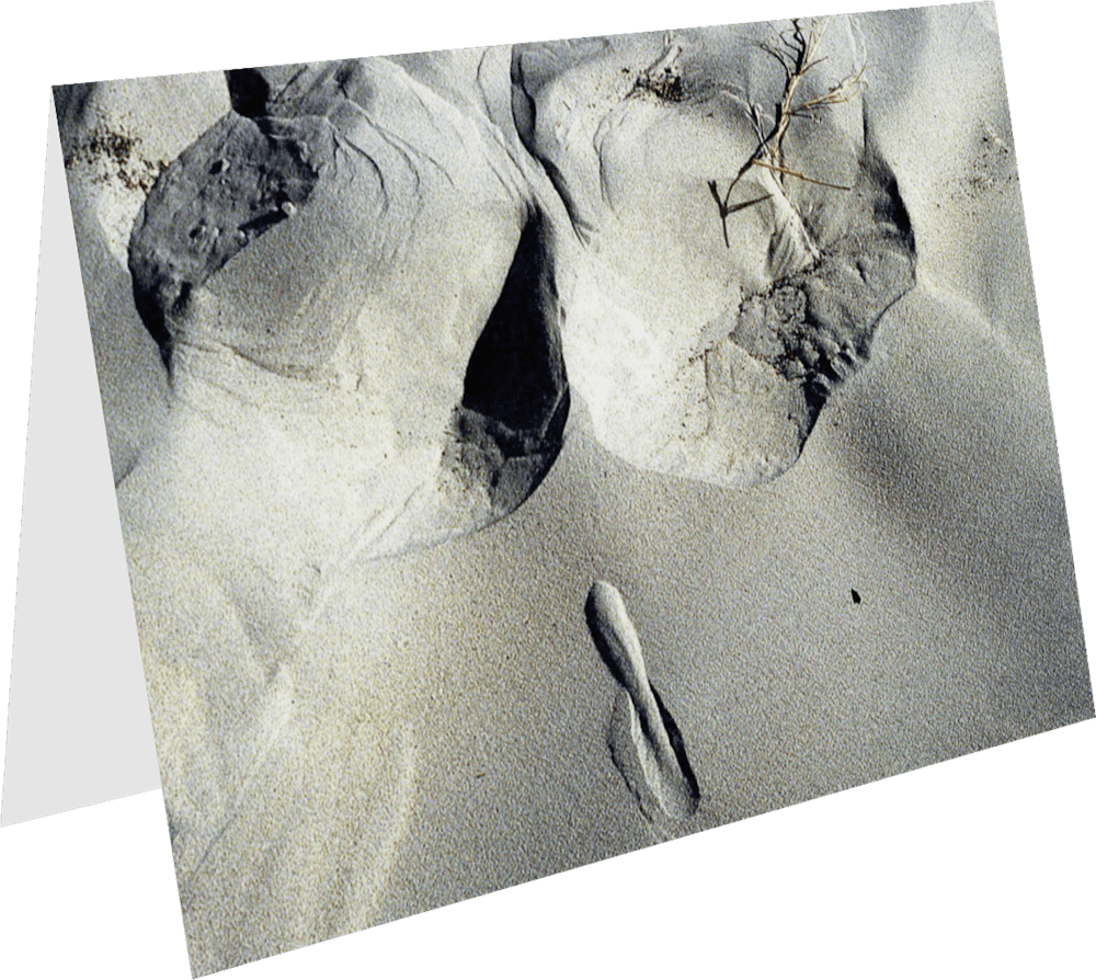 CLOSER EARTH SAN DIEGO EROTICA SD110 nature photography Sherry Mills PRINT 2 GREETING CARD 1
