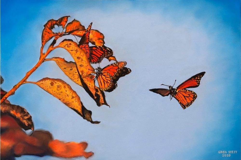 Roosting Monarchs