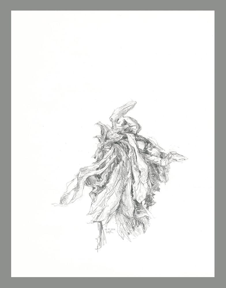 gatesman chrysanthemum 04 (L+R) (300