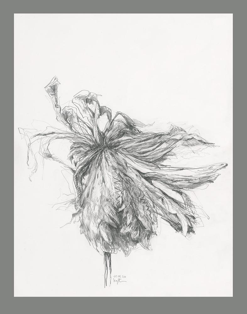 gatesman chrysanthemum 05 (L+R) (1000