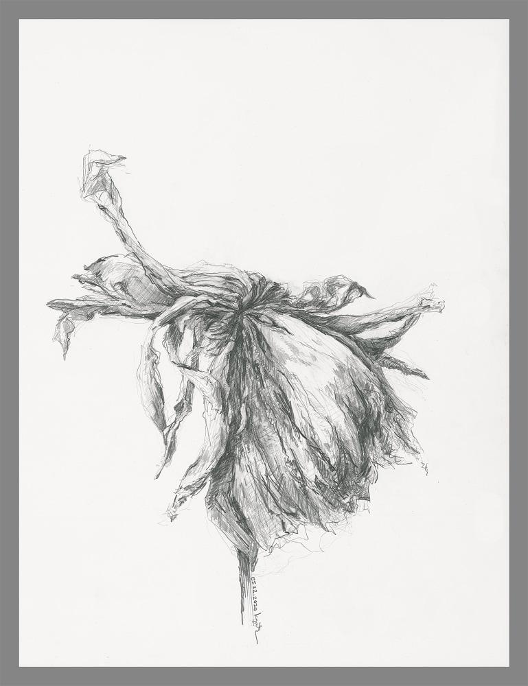 gatesman chrysanthemum 07 (L+R) (300