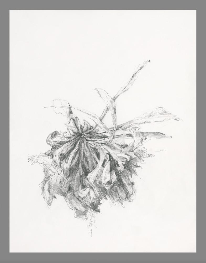 gatesman chrysanthemum 09 (L+R) (300