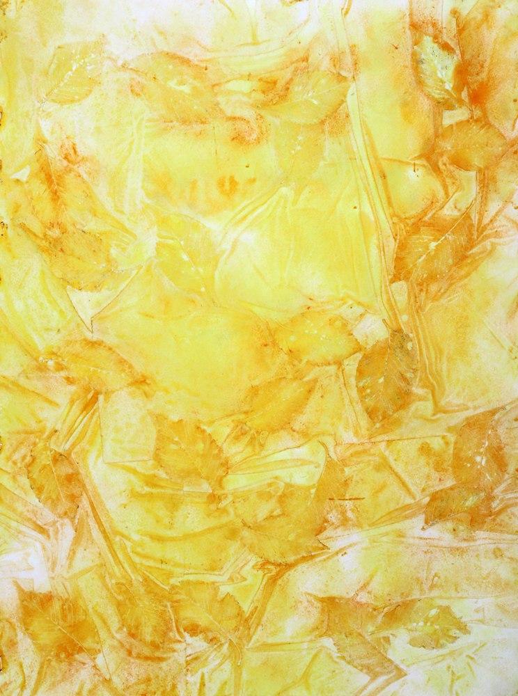 yellowocropped