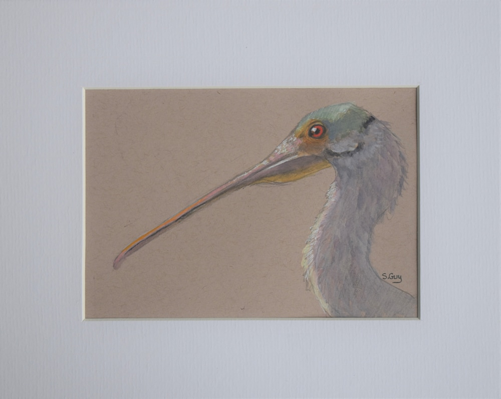 Spoonbill Side View matted