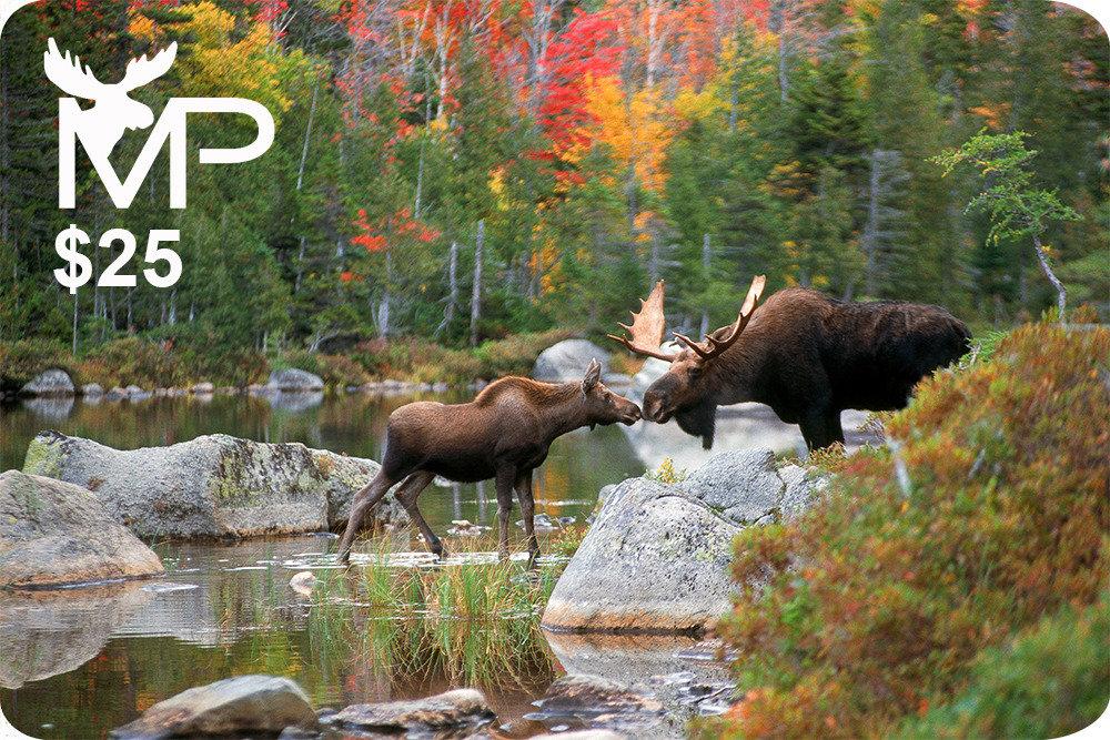 Kissing Moose Gift Card $25