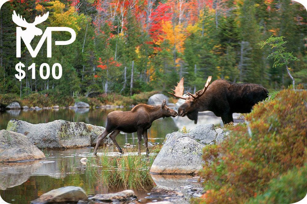 Kissing Moose Gift Card $100