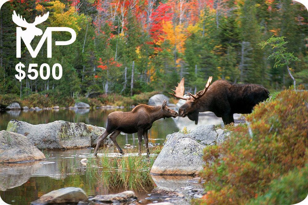 Kissing Moose Gift Card Blank $500