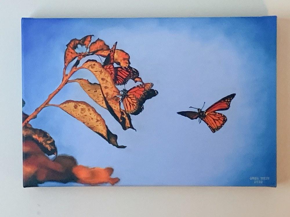 Monarchs hanging2