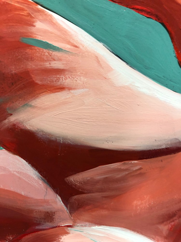 flamingo closeup