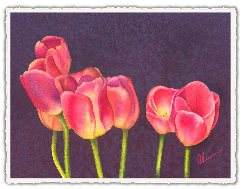 050201 4x6x300rr Tulips on Purple front